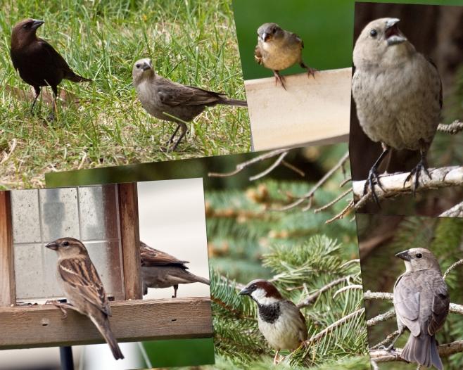 20100501 BirdCollage 8x10