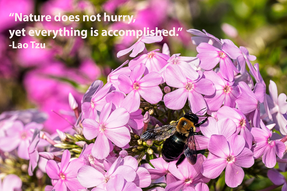 """Nature does not hurry, yet everything is accomplished."" - Lao Tzu"