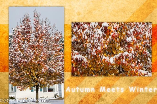 Autumn, Winter, Tree, Snow, Leaves