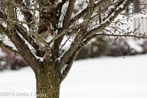 Animals, Squirrel, Tree